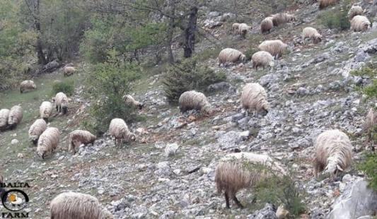 Vučković u Lici - Čak 175 malih poljoprivrednih gospodarstava prijavilo se na mjeru 6.3.1