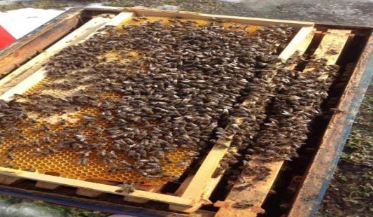 Apix detoks smiruje pčele i riješava brojne bolesti na pčelinjaku