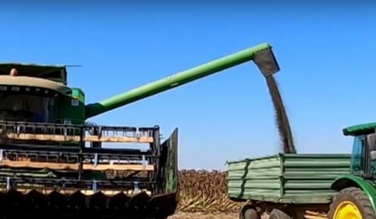 Suncokret - Nove tehnologije i visokooleinske sorte dale prinos i više od 4 t/ha