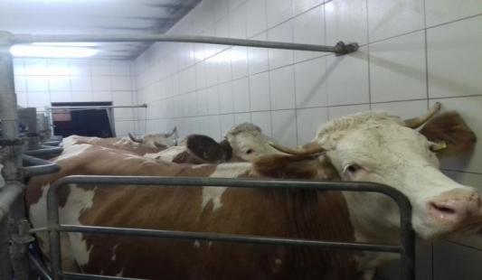 Dean - poticaj povećanju proizvedenih količina mlijeka i investicijama malih proizvođača u farme muznih krava