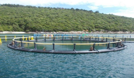 Cromaris ostvario prodaju od 10 tisuća tona ribe